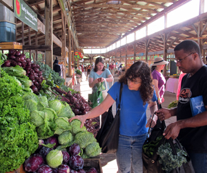 Ithaca Farmers' Market CSA Pick-up