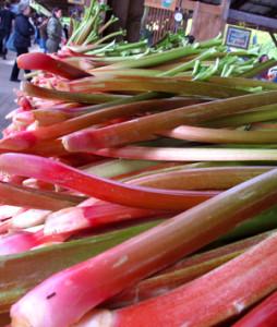 Early-Morning-Farm-Rhubarb