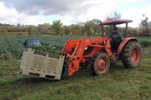 Syracuse CSA Harvest at Early Morning Farm