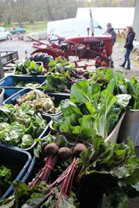 Binghamton-CSA-veggies
