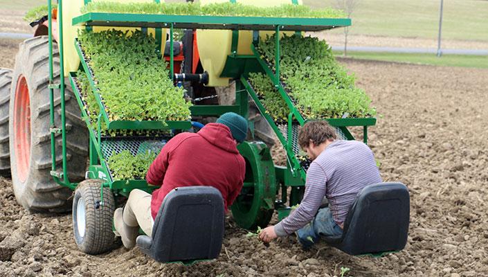 kale-planting-4.20.14