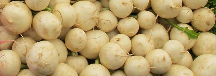 Hakurei Turnips by Early Morning Farm CSA