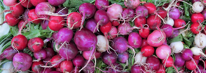 Radishes by Early Morning Farm