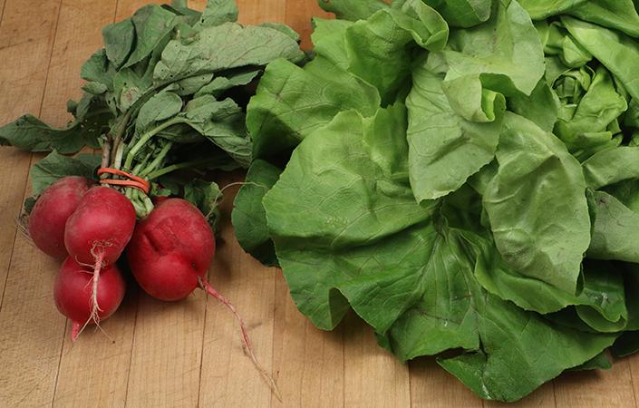 Radish Salad by Early Morning Farm