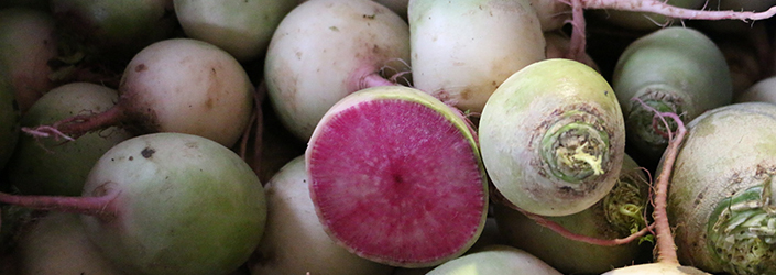 Watermelon Radish by Early Morning Farm CSA