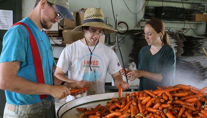 Washing CSA Carrots