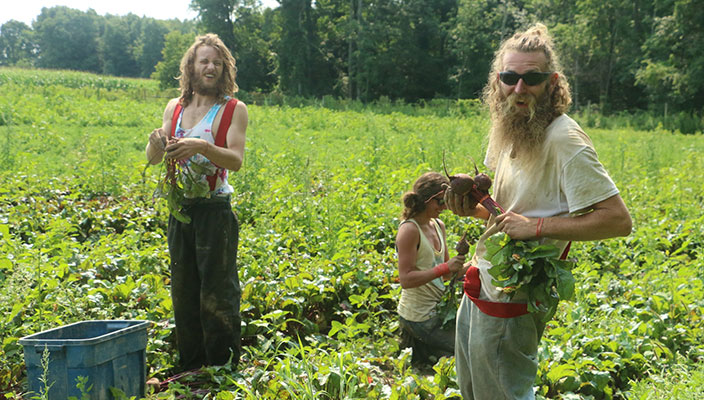 Beets-and-Beards
