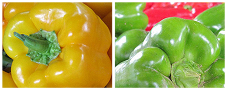 Bell Peppers by Early Morning Farm CSA