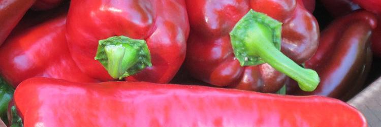 Italian Sweet Peppers by Early Morning Farm