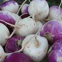 purpletopturnips