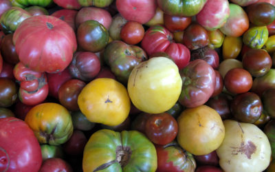 Greens, Heirloom Tomato and Lima Bean Soup