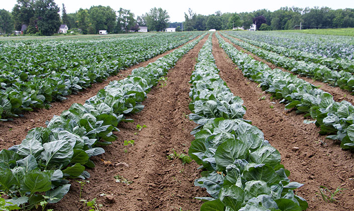 Harvest Forecast – Week Eight