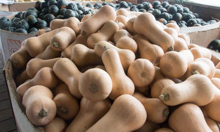 CSA Harvest Forecast – Week 19 (of 23)
