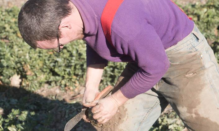 CSA Harvest Forecast – Final Week!