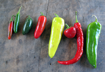 Spice in the CSA Share – A Guide to the Hot Peppers