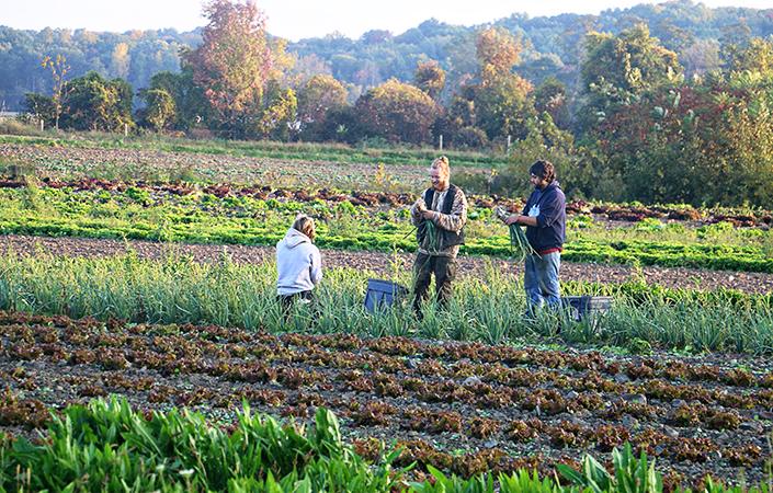 CSA Harvest Forecast – Week 22 (of 23)