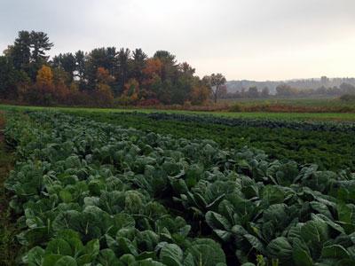 CSA Harvest Forecast – Week 18