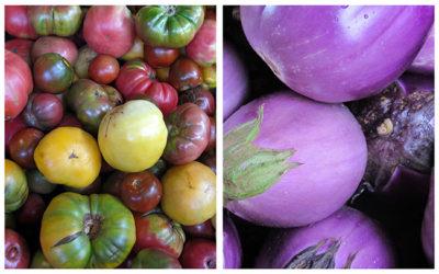 Heirloom Tomato and Eggplant Gratin